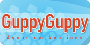 Guppy Guppy Aquarium Auctions